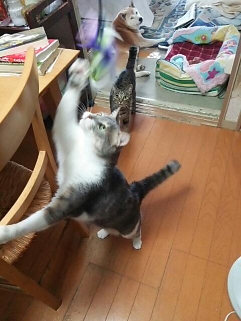 猫じゃらしで_b0112380_21062549.jpg
