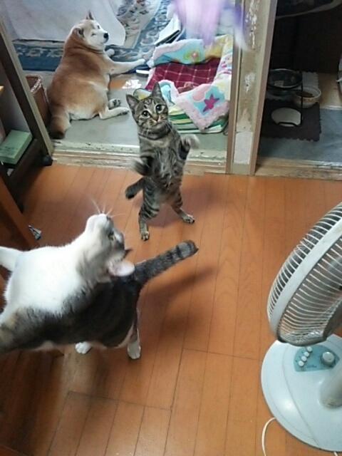 猫じゃらしで_b0112380_21063596.jpg