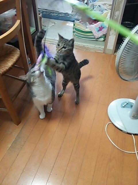 猫じゃらしで_b0112380_21064442.jpg