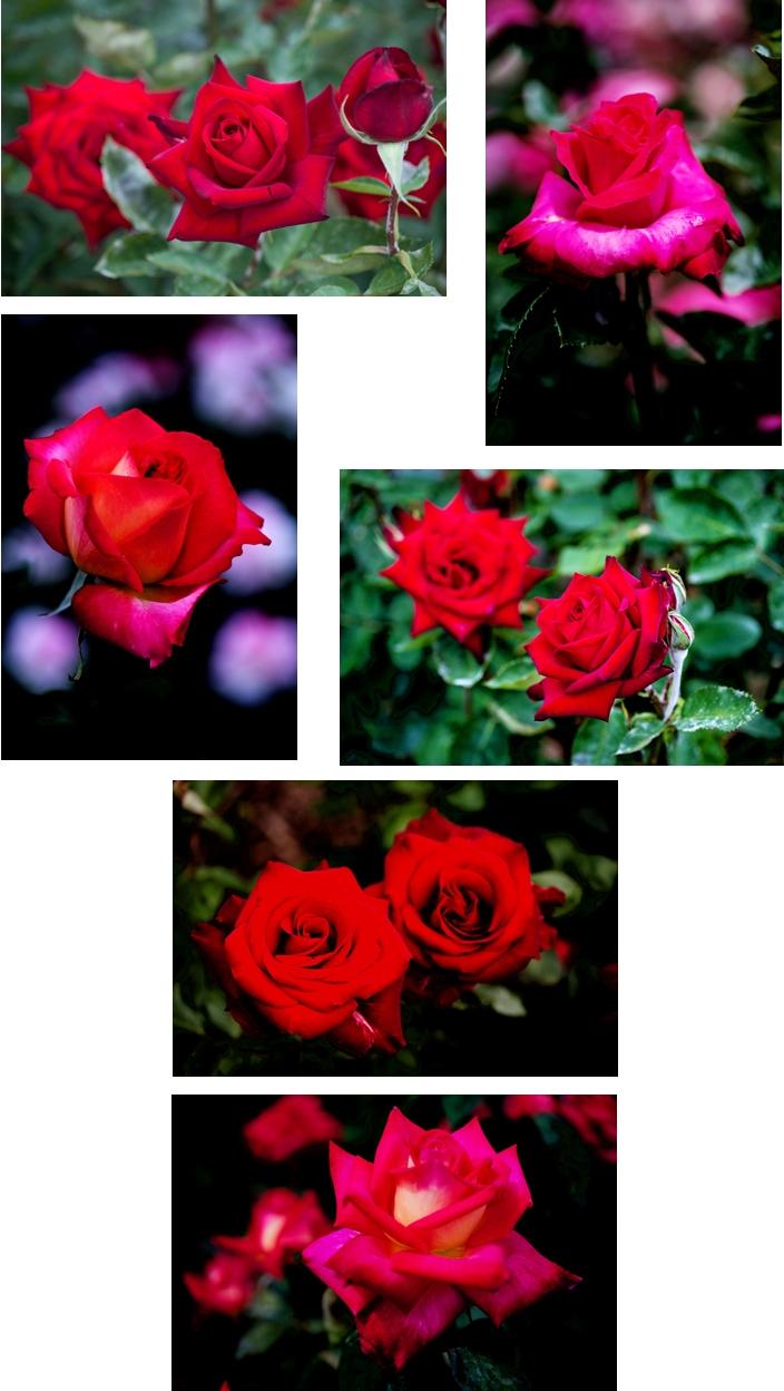 f0093285_15205832.jpg