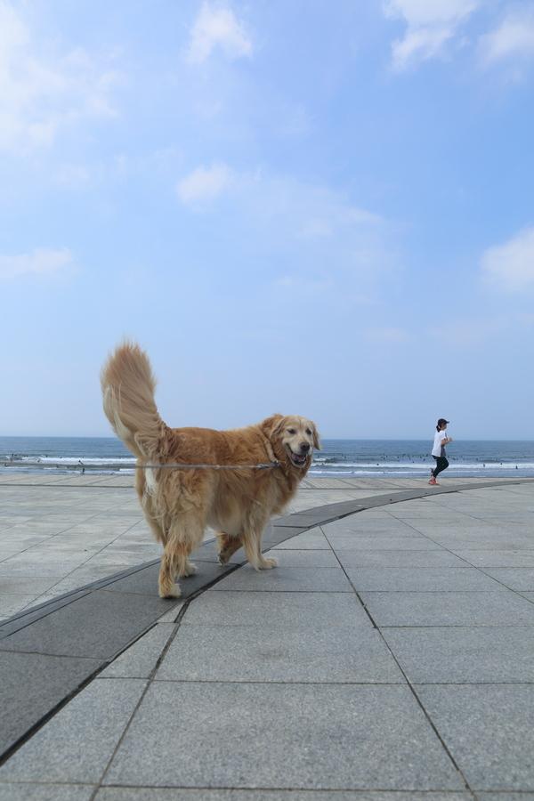 湘南ガール♪_b0275998_15164596.jpg