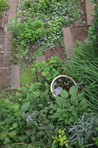 5月の庭…2015_c0124100_10551233.jpg