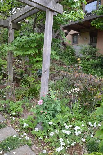 5月の庭…2015_c0124100_10561450.jpg