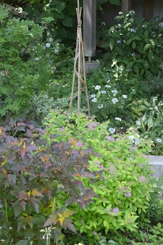 5月の庭…2015_c0124100_1056356.jpg