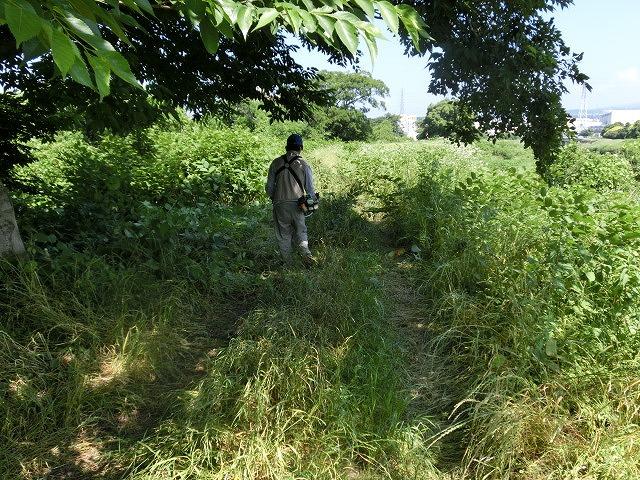 暑さに負けず! 本年度最初の滝川の草刈り清掃_f0141310_728555.jpg