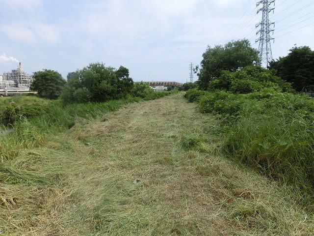暑さに負けず! 本年度最初の滝川の草刈り清掃_f0141310_7293856.jpg