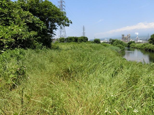 暑さに負けず! 本年度最初の滝川の草刈り清掃_f0141310_7295462.jpg