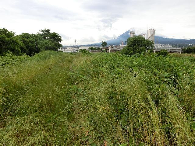 暑さに負けず! 本年度最初の滝川の草刈り清掃_f0141310_7334855.jpg