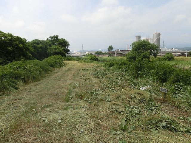 暑さに負けず! 本年度最初の滝川の草刈り清掃_f0141310_7335868.jpg
