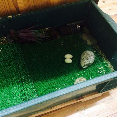 産卵と着工に向けて。_b0131012_20105640.jpg