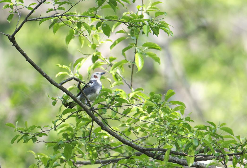 夏鳥遠征④_f0288418_522081.jpg
