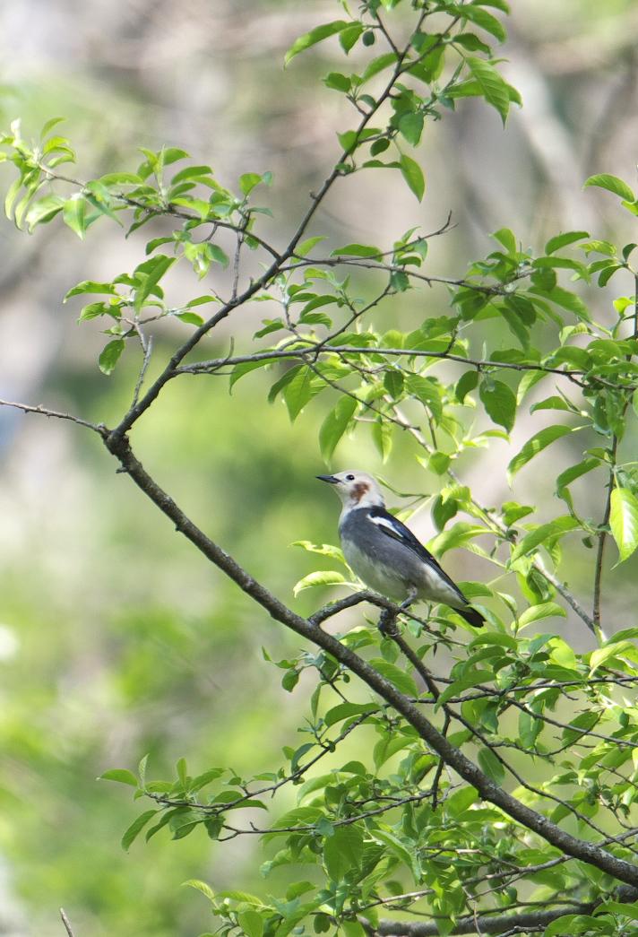 夏鳥遠征④_f0288418_5221245.jpg