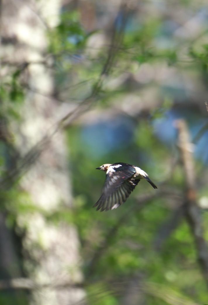 夏鳥遠征④_f0288418_5222086.jpg