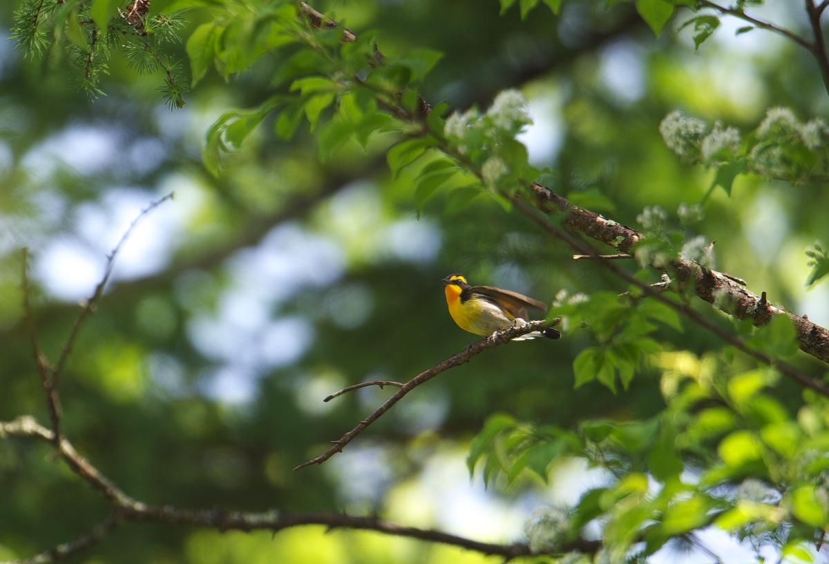 夏鳥遠征④_f0288418_523327.jpg