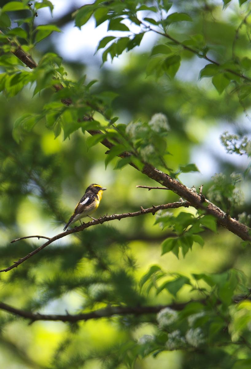 夏鳥遠征④_f0288418_5235734.jpg
