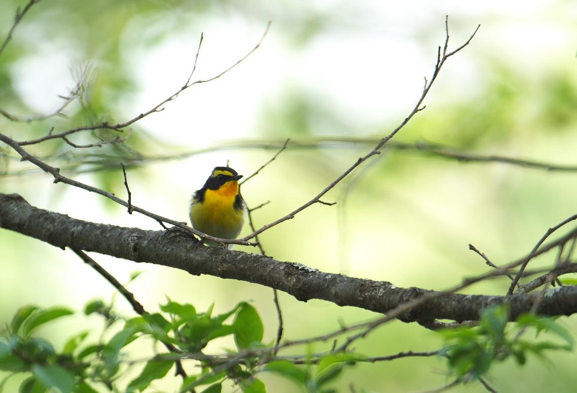 夏鳥遠征④_f0288418_5242835.jpg