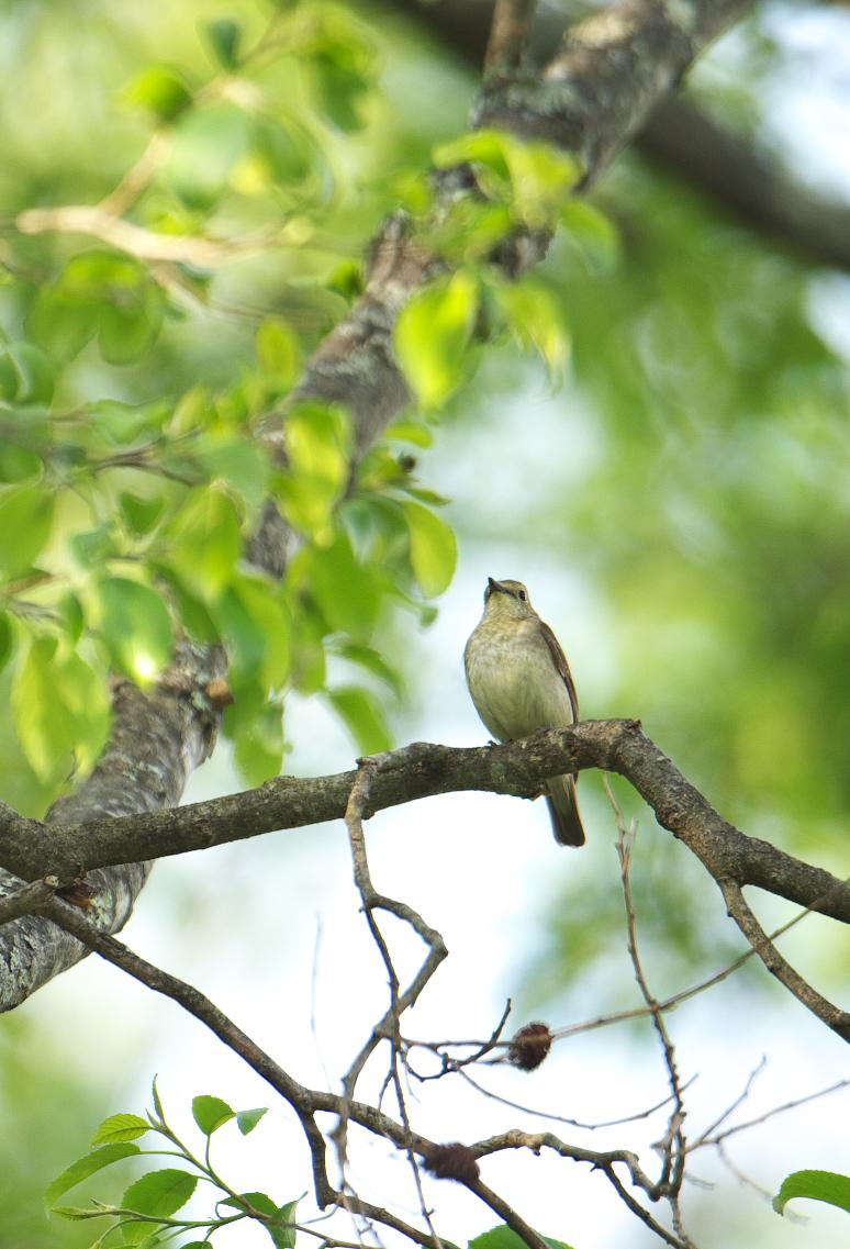夏鳥遠征④_f0288418_524447.jpg