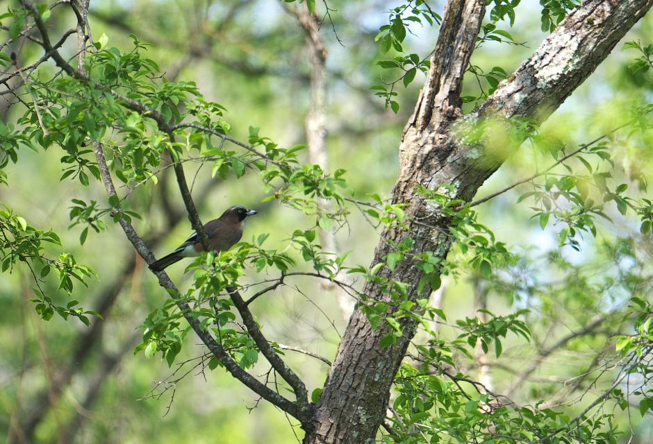 夏鳥遠征④_f0288418_5251713.jpg
