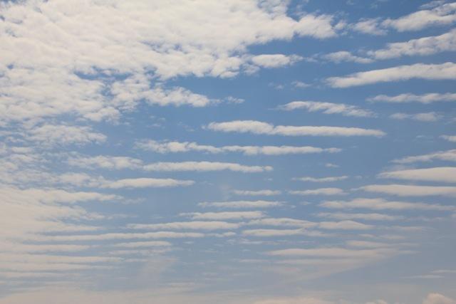 雲。グミの木。_f0348831_21115512.jpg