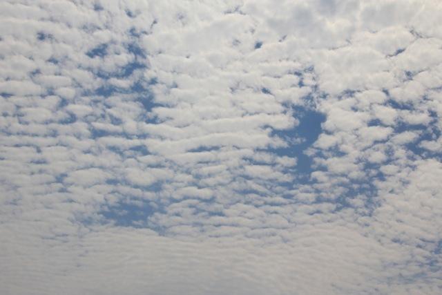 雲。グミの木。_f0348831_21120921.jpg
