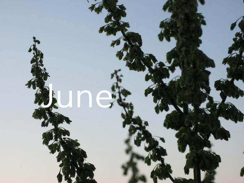 6月定休日のお知らせ_a0306355_2229452.jpg