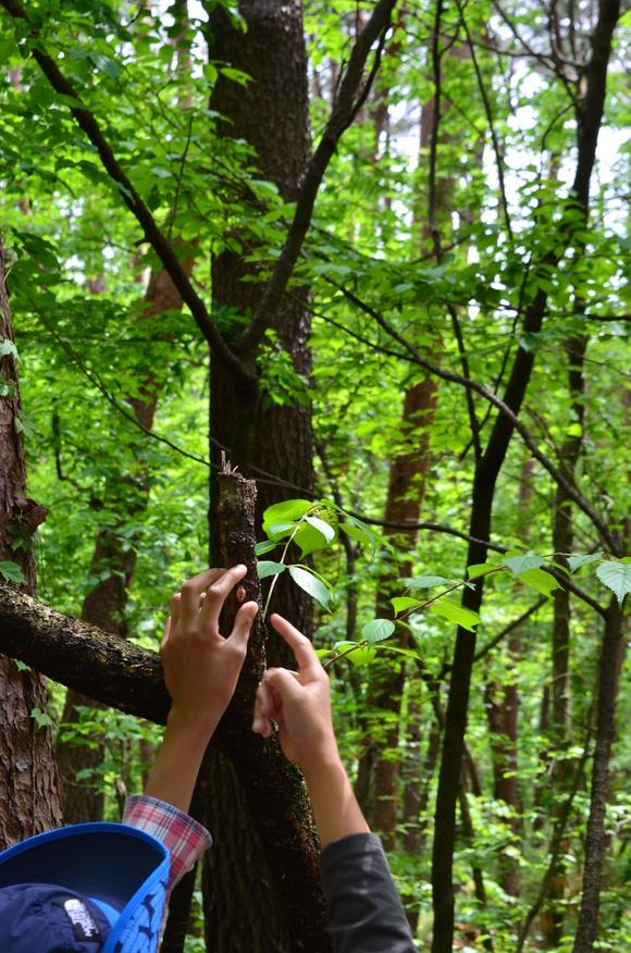おいしい天然水ができる自然を見学!親子で「森と水」を感じるプログラム体験!