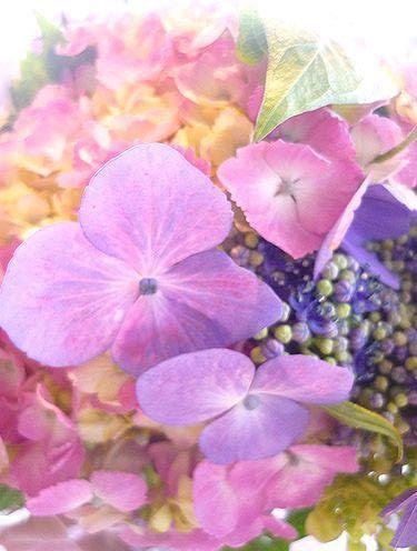 「第2回代官山ジュニア音楽コンクール」@ピアノ音楽誌『ショパン』6月号。。。♪•*¨*•.¸¸♪♡✝_a0053662_16191544.jpg