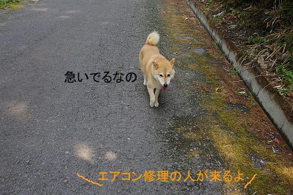 b0088173_20201398.jpg