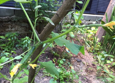 はなれの庭-2_f0232994_16353778.jpg