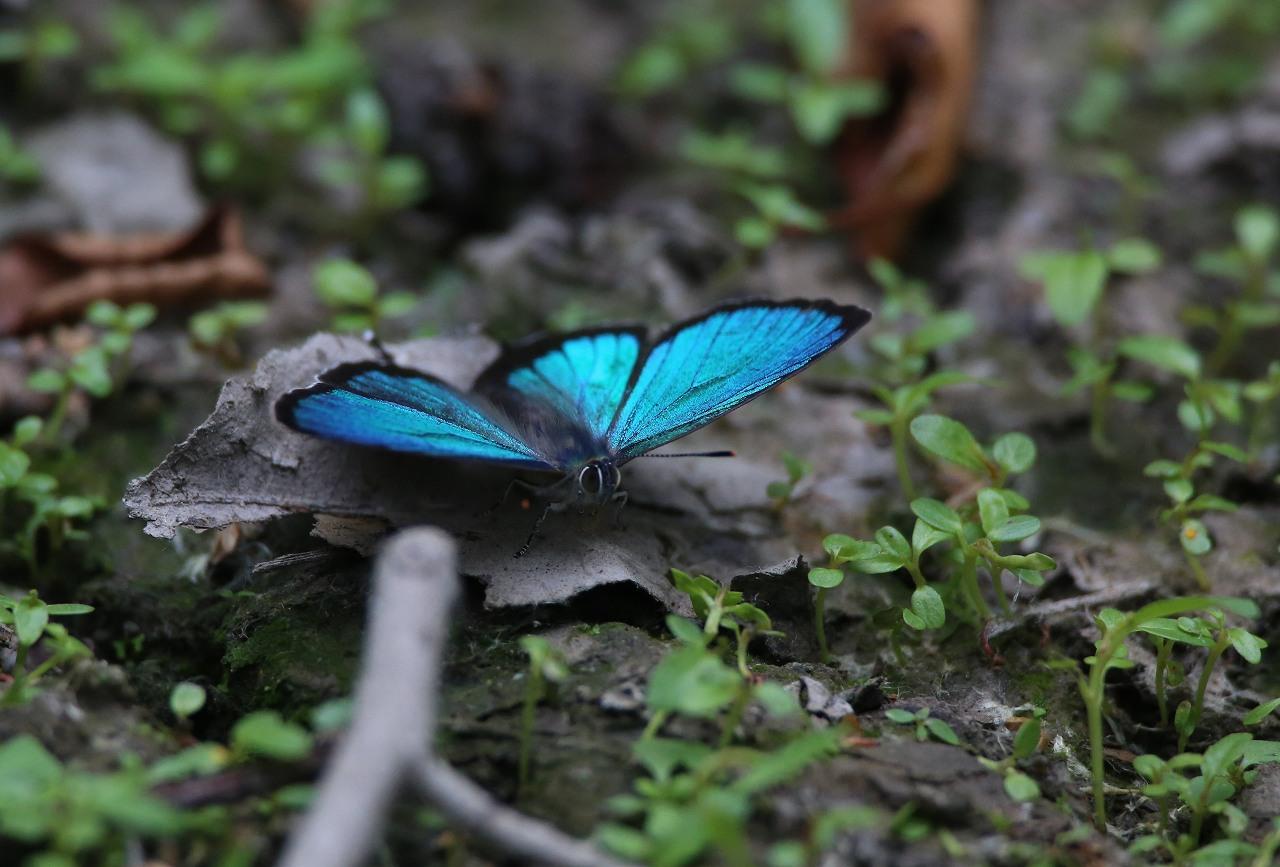 APの森の宝石_f0296999_18123815.jpg