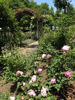 花も団子も_c0106100_13465651.jpg