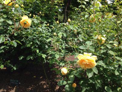 花も団子も_c0106100_1346585.jpg
