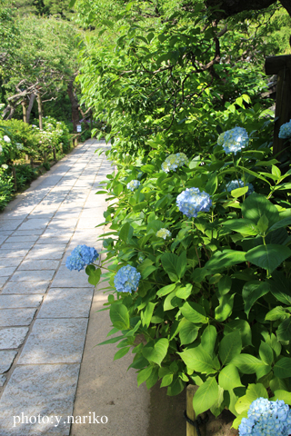 北鎌倉へお届け  お庭のお花に癒されました_b0113510_17185640.jpg