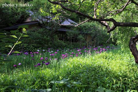 北鎌倉へお届け  お庭のお花に癒されました_b0113510_17191172.jpg