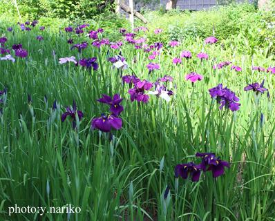 北鎌倉へお届け  お庭のお花に癒されました_b0113510_17191627.jpg