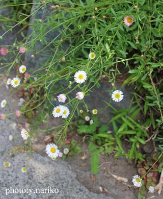 北鎌倉へお届け  お庭のお花に癒されました_b0113510_17192724.jpg