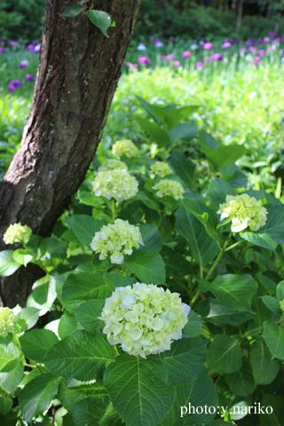北鎌倉へお届け  お庭のお花に癒されました_b0113510_1719290.jpg