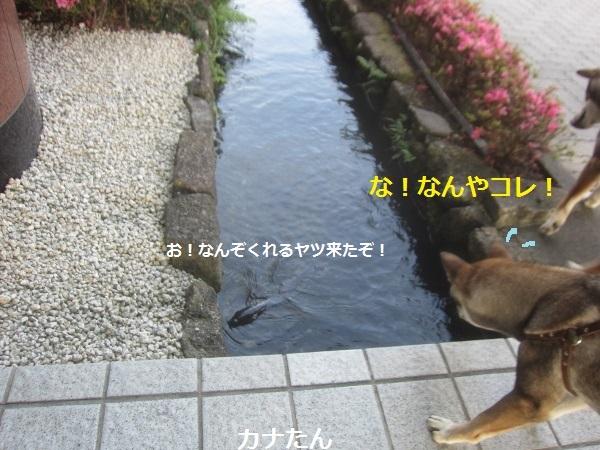 f0143123_15494927.jpg