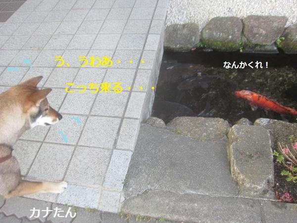 f0143123_15513536.jpg