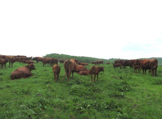 今日の短角牛放牧地_b0206037_19463444.jpg