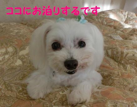 b0193480_11424553.jpg
