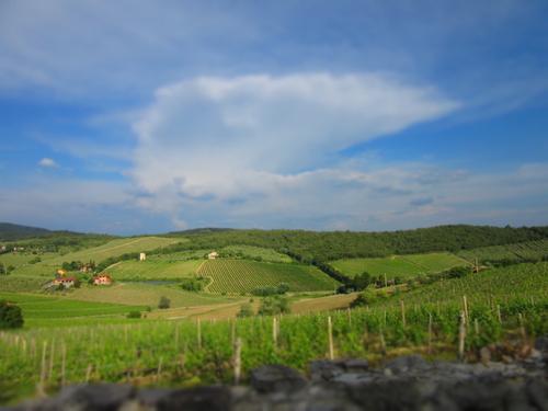 CANTINE APERTE ==トスカーナのワインを楽しめるチャンス_c0179785_15213076.jpg