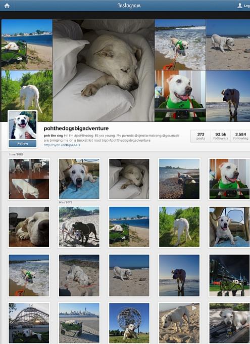 余命わずかの愛犬とNYから全米横断の旅へ・・・ poh the dog\'s big adventure_b0007805_10151056.jpg