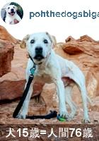 余命わずかの愛犬とNYから全米横断の旅へ・・・ poh the dog\'s big adventure_b0007805_10174489.jpg