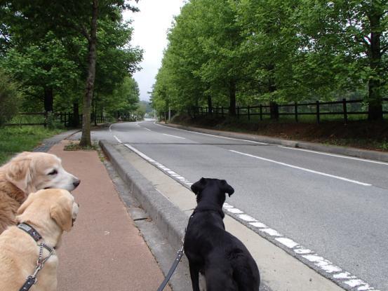 雨上りの午後の散歩_f0064906_17234840.jpg