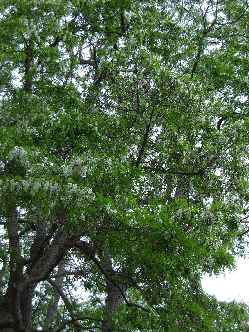 午後から豪雨(大雨・洪水警報):明日から北大祭_c0025115_19061106.jpg