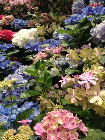 花。ハナ。はな。_c0006826_06421045.jpg
