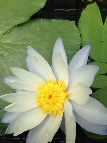 花。ハナ。はな。_c0006826_06450946.jpg