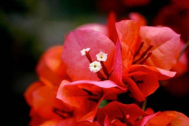 【神奈川県立フラワーセンター大船植物園】part 3_f0348831_07490092.jpg