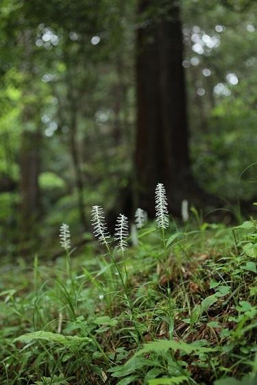森の中の灯火_e0304170_19025050.jpg